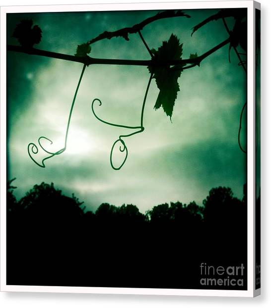 Vines Canvas Print