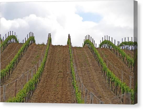 Vines Flow Over The Landscape Canvas Print