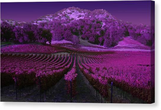 Vineyard 41 Canvas Print