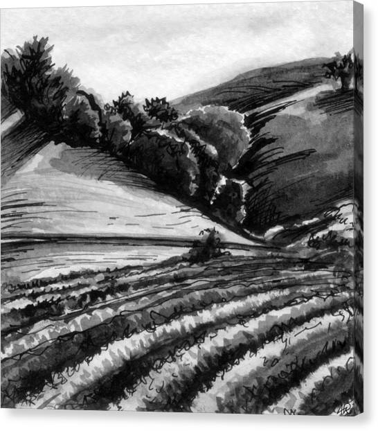 Black and white grape vineyard canvas print vineyard by allison rogers