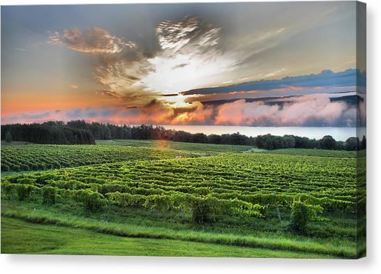 Vineyard At Sunrise Canvas Print
