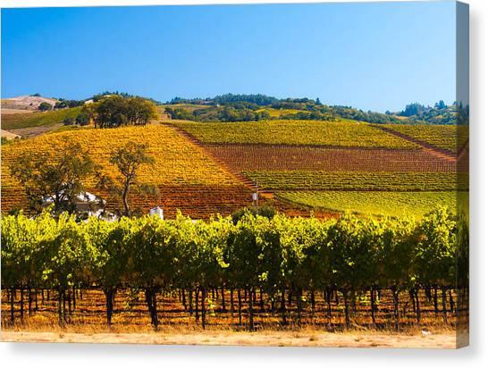 Vineyard Colors Canvas Print