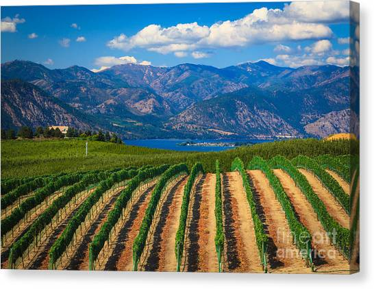 Wine Canvas Print - Vineyard In The Mountains by Inge Johnsson