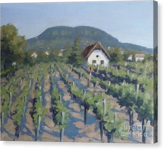 Vineyard Of Badacsony Canvas Print