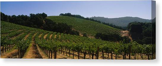 Vineyard In Napa Canvas Print - Vineyard On A Landscape, Napa Valley by Panoramic Images