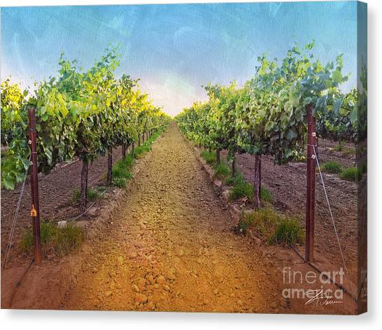 Vineyard Road Canvas Print