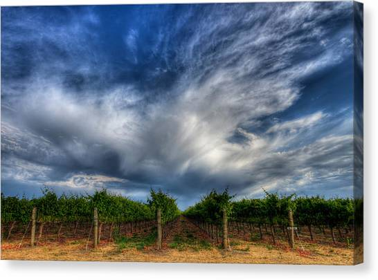 Vineyard Storm Canvas Print