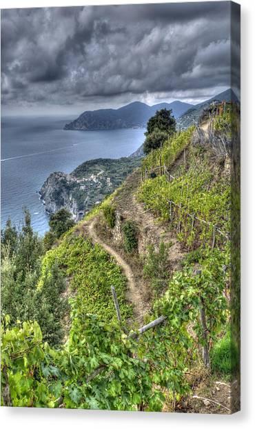 Vineyards Above Cinque Terre 1 Canvas Print