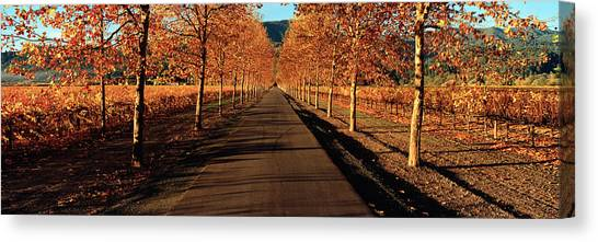 Vineyard In Napa Canvas Print - Vineyards Along A Road, Beaulieu by Panoramic Images