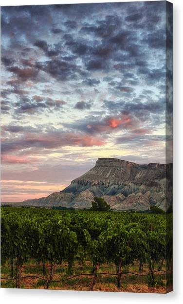 Vineyards And Mt Garfield Canvas Print