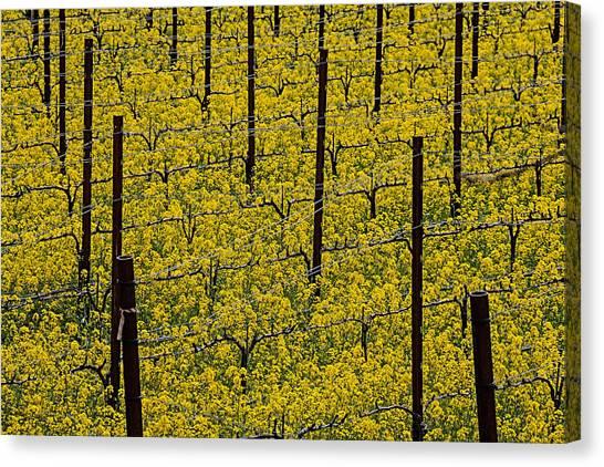 Mustard Canvas Print - Vineyards Full Of Mustard Grass by Garry Gay