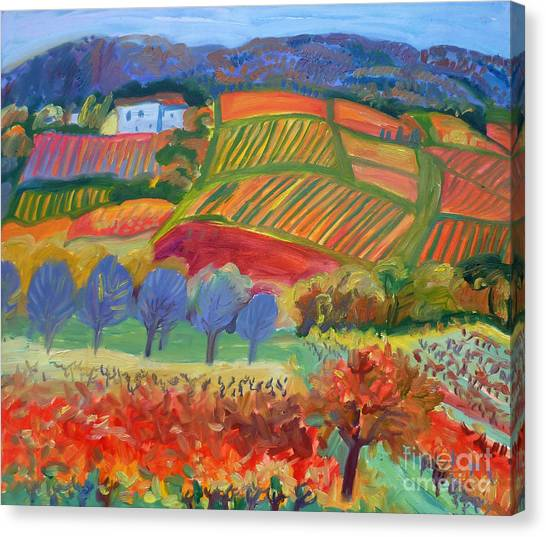 Vineyards. South Of France Canvas Print