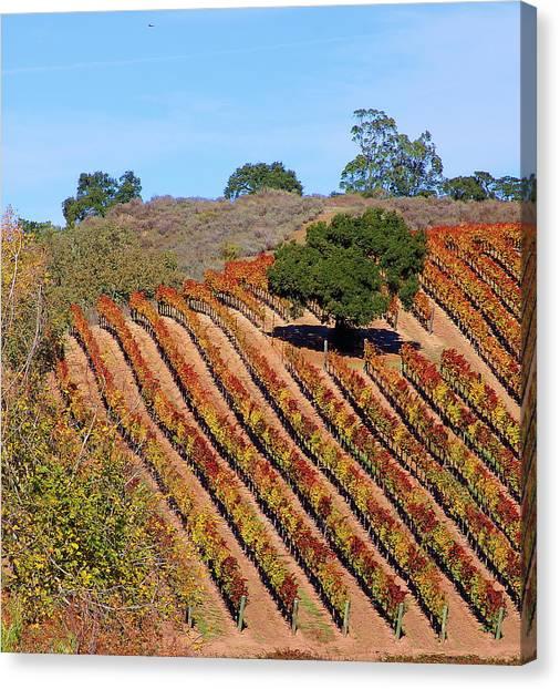 Vineyards Canvas Print