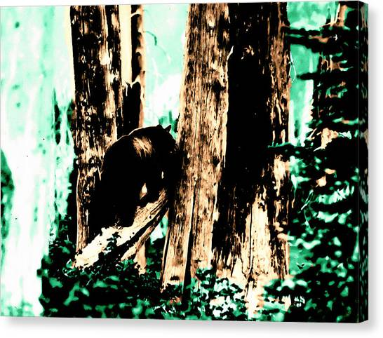 Vintage Bear In The Mount Rainier Forest Early 1900 Era... Canvas Print