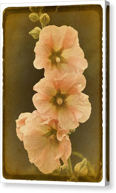Vintage Hollyhock No. 2 Canvas Print