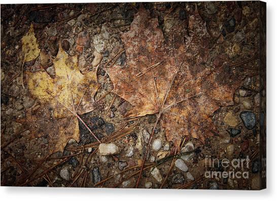 Vintage Maple Leaf Canvas Print by Jolanta Meskauskiene
