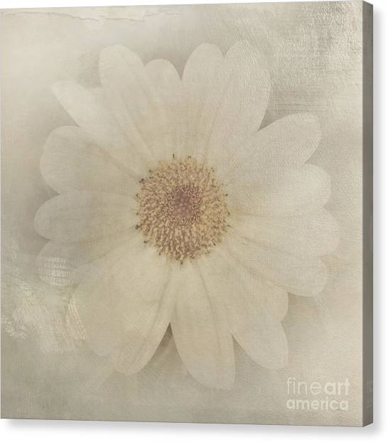 Vintage Painterly White Daisy  Canvas Print