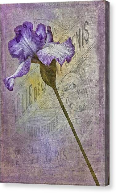 Vintage Pourpre Iris Canvas Print by Chanin Green