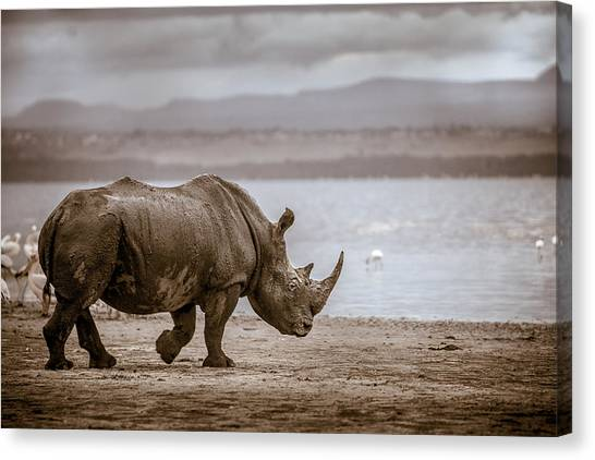 Vintage Rhino On The Shore Canvas Print