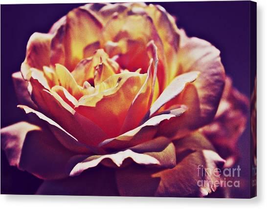 Vintage Rose Canvas Print by Judy Palkimas