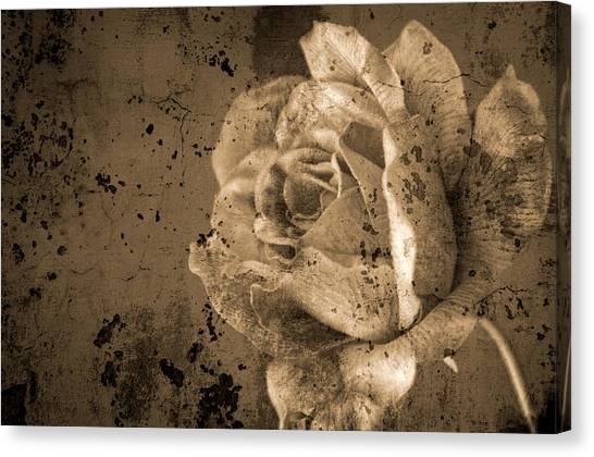 Vintage Rose Canvas Print