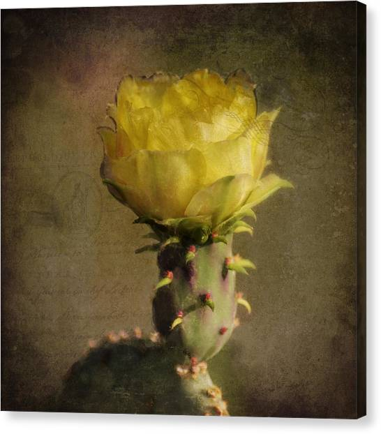 Vintage Yellow Cactus Canvas Print