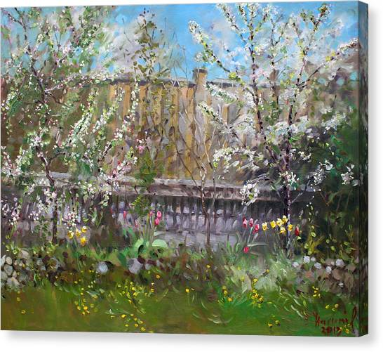 Tree Blossoms Canvas Print - Viola's Apple And Cherry Trees by Ylli Haruni