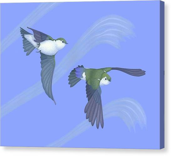 Swallow Canvas Print - Violet-green Swallows by Nathan Marcy