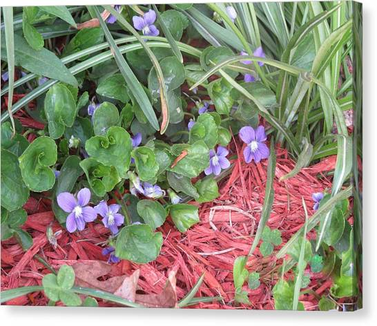 Violets Canvas Print by Diane Mitchell