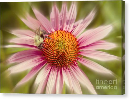 Vip Very Important Pollinator Canvas Print