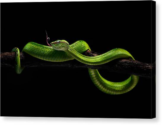 Tongue Canvas Print - Viper One by Rooswandy Juniawan