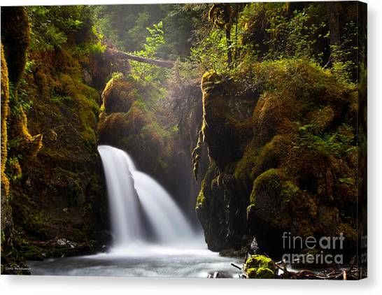 Virgin Creek Falls Canvas Print