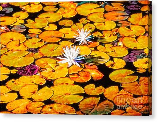 Virginia Lilies Canvas Print