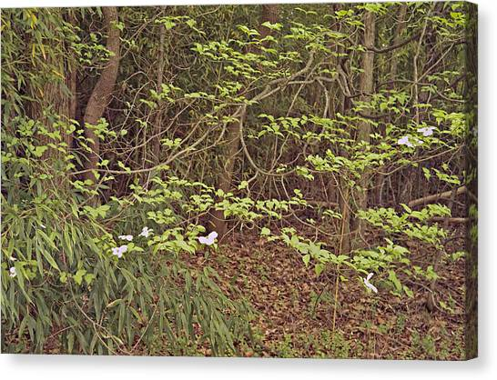 Virginia Woods Photo Canvas Print by Peter J Sucy