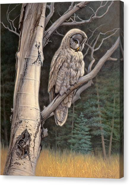 Grey Canvas Print - Visitor From The North-great Grey Owl by Paul Krapf