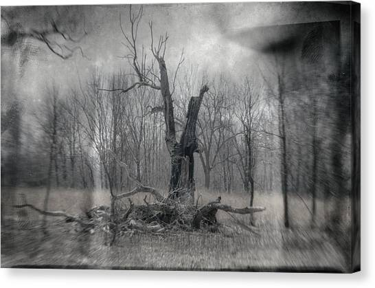 Visitor In The Woods Canvas Print
