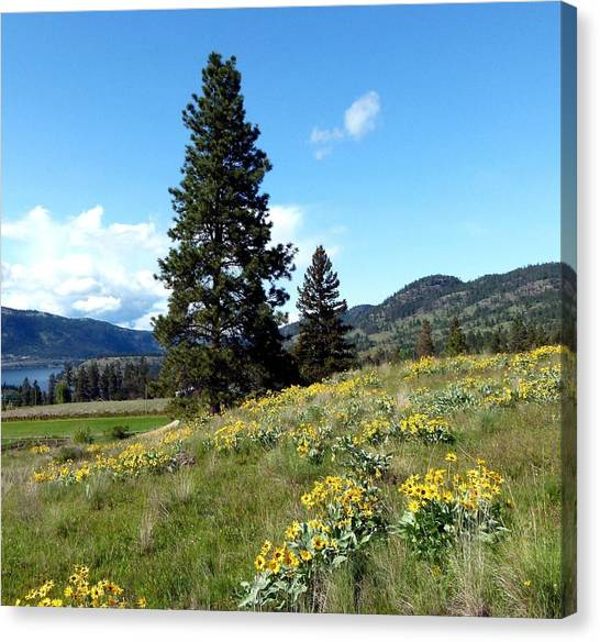 Wild Orchards Canvas Print - Vista 23 by Will Borden