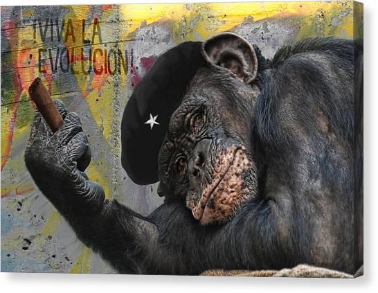 Chimpanzees Canvas Print - Viva La Evolucion by Joachim G Pinkawa
