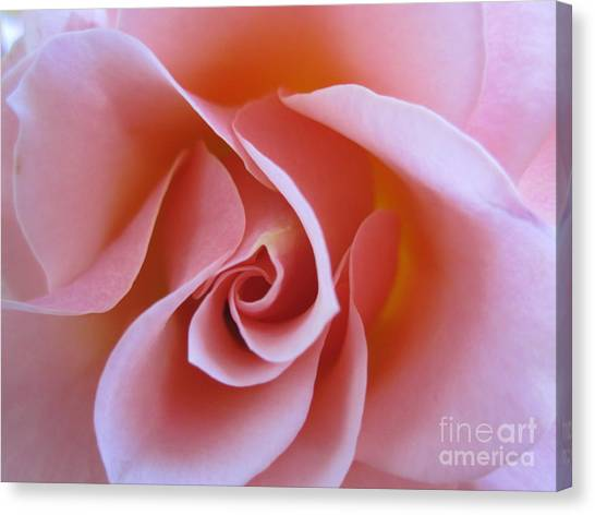 Vivacious Pink Rose Canvas Print
