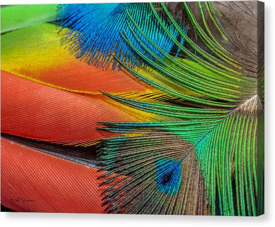 Vivid Colored Feathers Canvas Print by Jeff Swanson