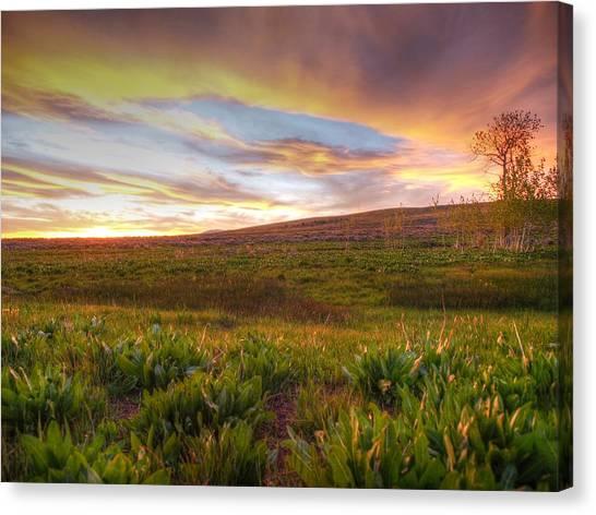 Vivid Sunset Canvas Print