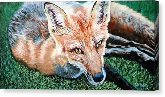 Vixen - Red Fox Canvas Print