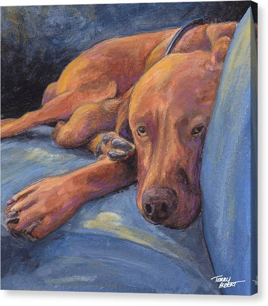 Vizsla Napping Canvas Print