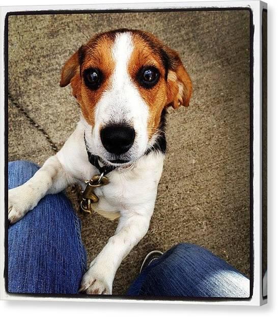 Beagles Canvas Print - @vkgregg @bobertg Looks Like An Oprah by Elizabeth B