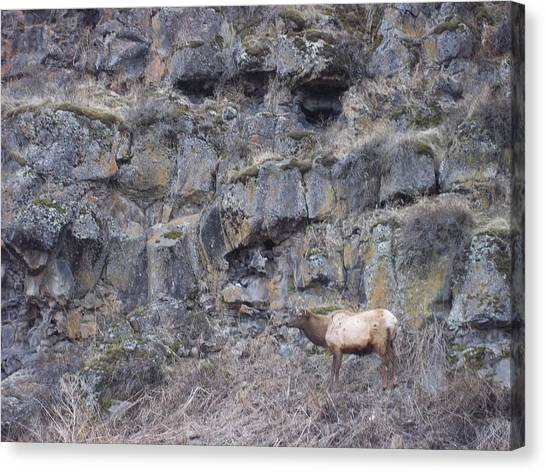 Volcanic Formation And Elk Canvas Print by Angela Stout