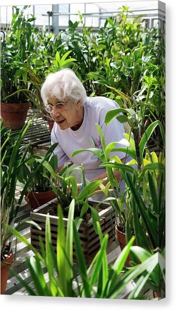 University Of Michigan Canvas Print - Volunteer At A Botanic Garden by Jim West