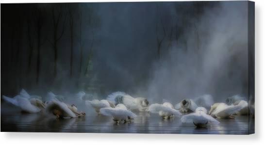 Swans Canvas Print - Von Rothbart's Curse by Peet Van Den