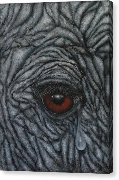Vulnerable Comes Before Endangered Canvas Print