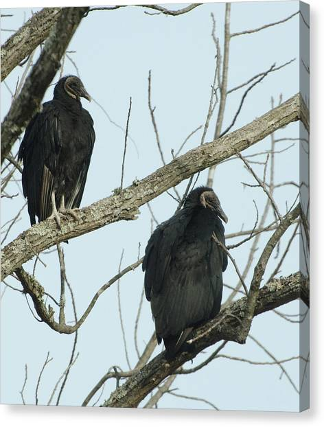 Brian Rock Canvas Print - Vultures by Brian Rock