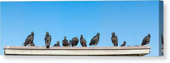 Anhinga Canvas Print - Vultures On Anhinga Trail, Everglades by Panoramic Images